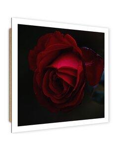 Tableau bois Beautiful red rose