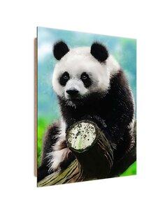 Tableau bois Panda in a tree