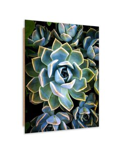 Tableau bois exotic cacti graphics
