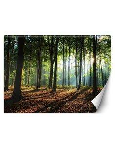 Papier peint Matin dans la forêtL   Feeby   Marron