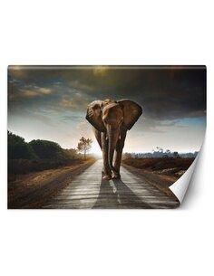 Papier peint Éléphant errantL | Feeby | Marron