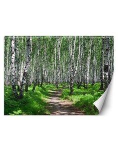 Papier peint Forêt de bouleauxL | Feeby | Vert