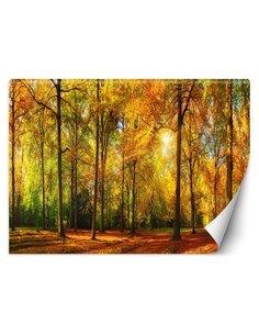 Papier peint Forêt d'automneL   Feeby   Orange