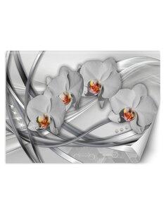 Papier peint Orchidées abstraitesL   Feeby   Argent
