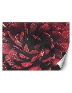 Papier peint Fleur à l'échelle macroL   Feeby   Rouge
