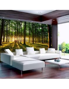 Papier peint adhésif Un matn de printemps dans la forêt | Artgeist | Vert, brun, jaune