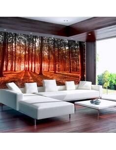 Papier peint adhésif Un matin d'automne en forêt | Artgeist | Brun, orange, azuré, vert