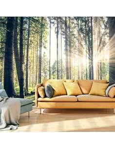 Papier peint adhésif Promenade en forêt | Artgeist | Vert, jaune, brun