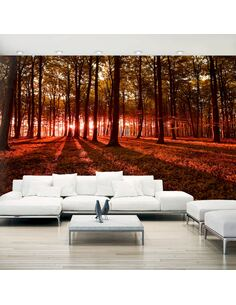 Papier peint adhésif Matin d'automne ii | Artgeist | Orange, brun, rouge